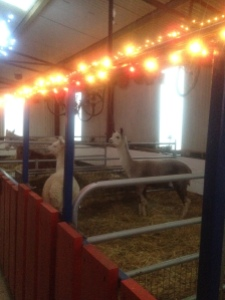 Even the animal pens get lights