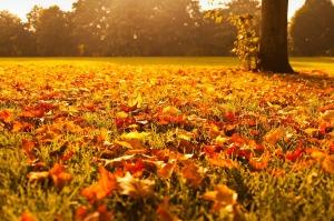 autumn-72736_1280